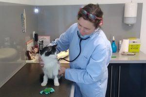 Notre pension pour chats est supervisée par des vétérinaires
