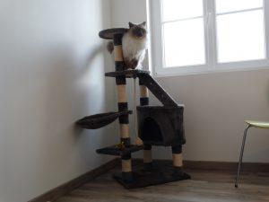 Chaque chambre a son arbre à chat