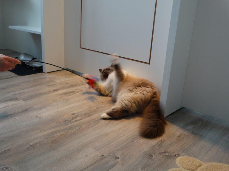 Jeu avec votre chat à l'hôtel félin