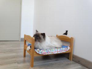 C'est la sieste, à la pension pour chat